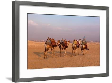 Egypt, Cairo, Pyramids of Gizeh, Cameleer-Catharina Lux-Framed Art Print