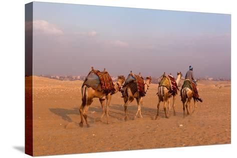 Egypt, Cairo, Pyramids of Gizeh, Cameleer-Catharina Lux-Stretched Canvas Print
