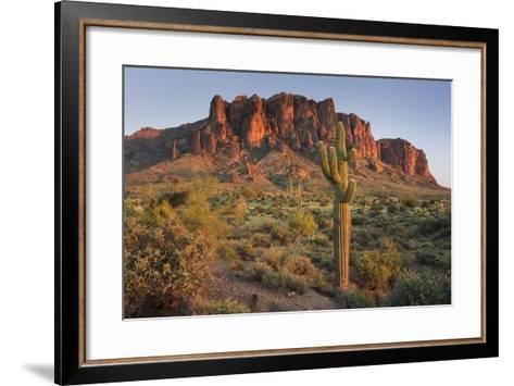 Carnegiea Gigantea, Saguaro Cacti, Hieroglyphic Trail, Lost Dutchman State Park, Arizona, Usa-Rainer Mirau-Framed Art Print