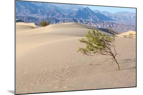 USA, Death Valley National Park, Mesquite Flat Sand Dunes-Catharina Lux-Mounted Photographic Print