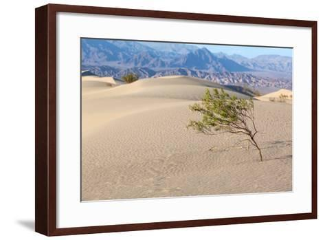 USA, Death Valley National Park, Mesquite Flat Sand Dunes-Catharina Lux-Framed Art Print