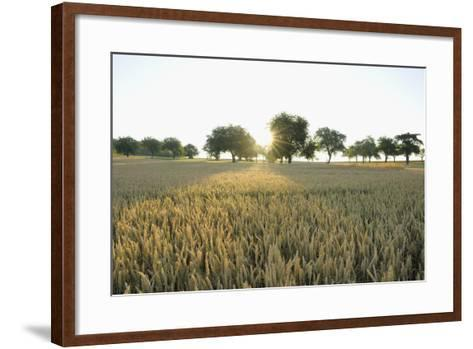 Wheat Field, Marktheidenfeld (Town), Franconia, Bavaria, Germany-Raimund Linke-Framed Art Print