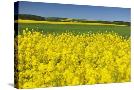 Rape Field, Fields, Spring, Edertal (Community), Edersee National Park, Hessia, Germany-Raimund Linke-Stretched Canvas Print