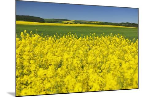 Rape Field, Fields, Spring, Edertal (Community), Edersee National Park, Hessia, Germany-Raimund Linke-Mounted Photographic Print