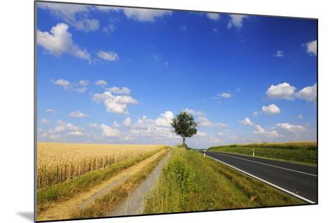 Wheat Field, Summer, Marktheidenfeld (Town), Franconia, Bavaria, Germany-Raimund Linke-Mounted Photographic Print