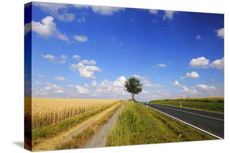 Wheat Field, Summer, Marktheidenfeld (Town), Franconia, Bavaria, Germany-Raimund Linke-Stretched Canvas Print