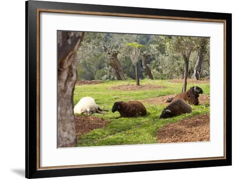 Spanish Balearic Islands, Island Majorca, Mountains of the Tramuntana, Village Dei?, Siesta-Chris Seba-Framed Art Print
