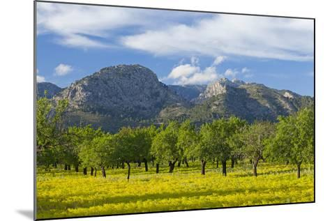 Spanish Balearic Islands, Island Majorca, Olive Grove Infront of the Mountains of the Tramuntana-Chris Seba-Mounted Photographic Print