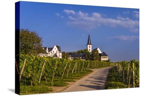 Germany, Hesse, Main-Taunus District, Hochheim Am Main, Vineyards-Udo Siebig-Stretched Canvas Print