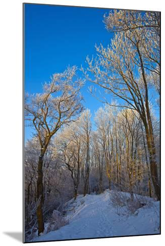 Europe, Germany, Weser Hills, Porta Westfalica, Winter Landscape, Forest Path-Chris Seba-Mounted Photographic Print