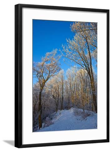 Europe, Germany, Weser Hills, Porta Westfalica, Winter Landscape, Forest Path-Chris Seba-Framed Art Print
