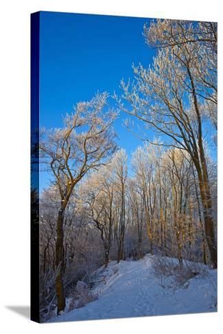 Europe, Germany, Weser Hills, Porta Westfalica, Winter Landscape, Forest Path-Chris Seba-Stretched Canvas Print