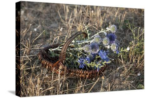 Meadow Flowers in the Basket-Andrea Haase-Stretched Canvas Print