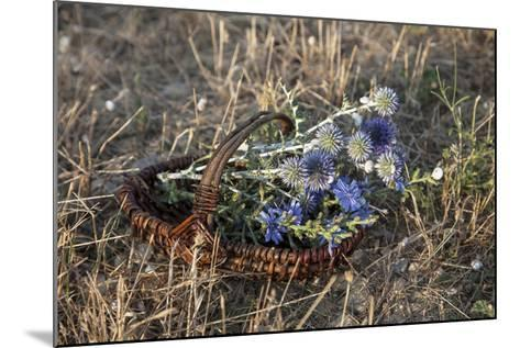 Meadow Flowers in the Basket-Andrea Haase-Mounted Photographic Print