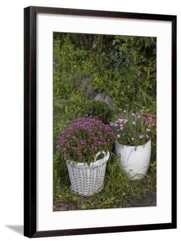 Asters in the Pot-Andrea Haase-Framed Art Print