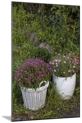 Asters in the Pot-Andrea Haase-Mounted Photographic Print