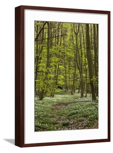 Europe, Germany, Mecklenburg-Western Pomerania, Baltic Sea Island RŸgen, Forest Path-Chris Seba-Framed Art Print