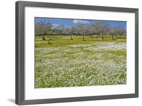 Europe, Spain, Majorca, Meadow, Daisy, Almonds-Chris Seba-Framed Art Print