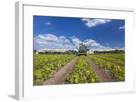 Europe, Germany, Brandenburg, Spreewald (Spree Forest), Cucumber Harvest-Chris Seba-Framed Art Print