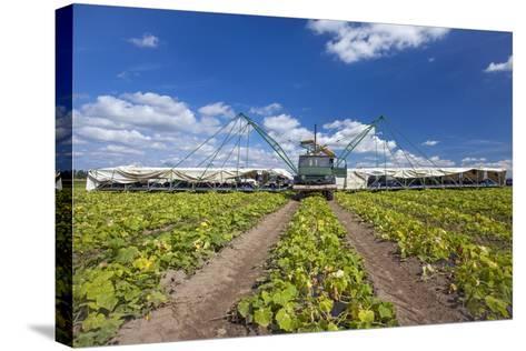 Europe, Germany, Brandenburg, Spreewald (Spree Forest), Cucumber Harvest-Chris Seba-Stretched Canvas Print