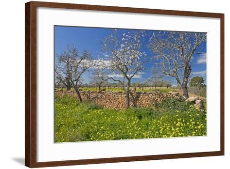 Europe, Spain, Majorca, Meadow, Yellow Flowers, Almonds-Chris Seba-Framed Art Print