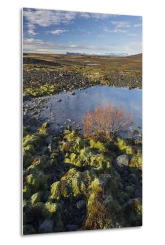 Moss Cushion, Shrub, Skaftafell, South Iceland, Iceland-Rainer Mirau-Metal Print