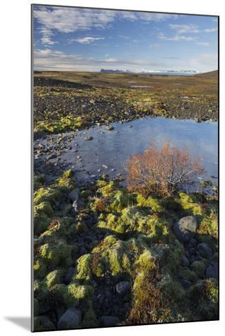 Moss Cushion, Shrub, Skaftafell, South Iceland, Iceland-Rainer Mirau-Mounted Photographic Print