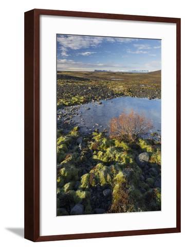Moss Cushion, Shrub, Skaftafell, South Iceland, Iceland-Rainer Mirau-Framed Art Print