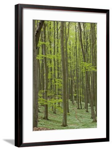 Europe, Germany, Mecklenburg-Western Pomerania, Baltic Sea Island R?gen, Forest Path-Chris Seba-Framed Art Print