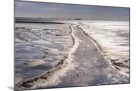 Germany, Schleswig-Holstein, North Frisia, North Frisian Marsh, Ockholm-Udo Siebig-Mounted Photographic Print