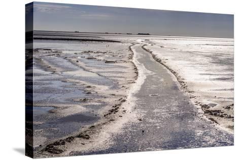Germany, Schleswig-Holstein, North Frisia, North Frisian Marsh, Ockholm-Udo Siebig-Stretched Canvas Print