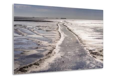 Germany, Schleswig-Holstein, North Frisia, North Frisian Marsh, Ockholm-Udo Siebig-Metal Print