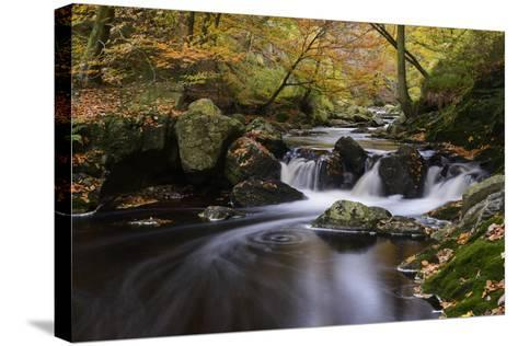 Belgium, High Fens, Hautes Fagnes, Nature Reserve High Fens-Eifel, Hoegne Gorge in Autumn-Andreas Keil-Stretched Canvas Print