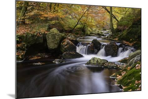 Belgium, High Fens, Hautes Fagnes, Nature Reserve High Fens-Eifel, Hoegne Gorge in Autumn-Andreas Keil-Mounted Photographic Print