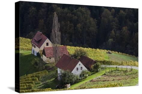 Europe, Austria, Styria, South-Styrian Wine Route, Wine Farm-Gerhard Wild-Stretched Canvas Print