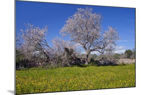 Europe, Spain, Majorca, Meadow, Almond, Almond Blossom, Yellow Flowers-Chris Seba-Mounted Photographic Print