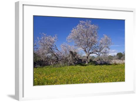 Europe, Spain, Majorca, Meadow, Almond, Almond Blossom, Yellow Flowers-Chris Seba-Framed Art Print