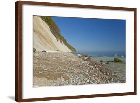 Europe, Germany, Mecklenburg-Western Pomerania, Baltic Sea Island R?gen, Chalk Cliffs, Swans-Chris Seba-Framed Art Print