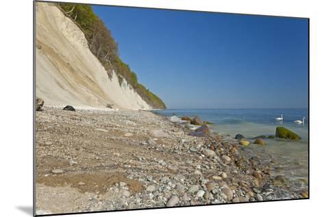 Europe, Germany, Mecklenburg-Western Pomerania, Baltic Sea Island R?gen, Chalk Cliffs, Swans-Chris Seba-Mounted Photographic Print