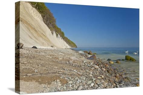 Europe, Germany, Mecklenburg-Western Pomerania, Baltic Sea Island R?gen, Chalk Cliffs, Swans-Chris Seba-Stretched Canvas Print