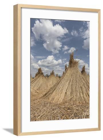 Bundled Up Reed Picked Up to Dry, Lake Neusiedl National Park, Seewinkl, Burgenland, Austria-Gerhard Wild-Framed Art Print