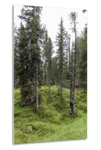 Forest at the Bottom of the Sas Dla Crusc, St. Leonhard Close Abtei, South Tyrol, Italy, Europe-Gerhard Wild-Metal Print