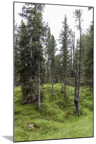 Forest at the Bottom of the Sas Dla Crusc, St. Leonhard Close Abtei, South Tyrol, Italy, Europe-Gerhard Wild-Mounted Photographic Print