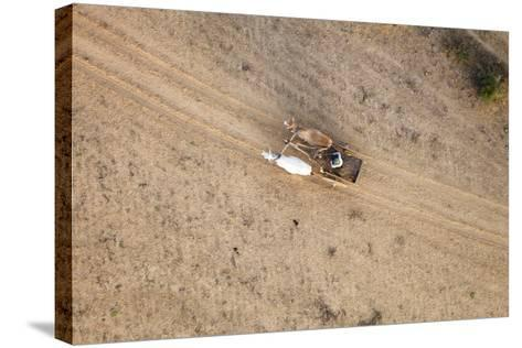Aerial View of Farmer on Dirt Road in Bagan, Myanmar-Harry Marx-Stretched Canvas Print