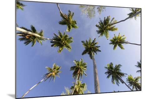 Coconut Trees, Plantation L'Union Estate, La Digue Island, the Seychelles-Rainer Mirau-Mounted Photographic Print
