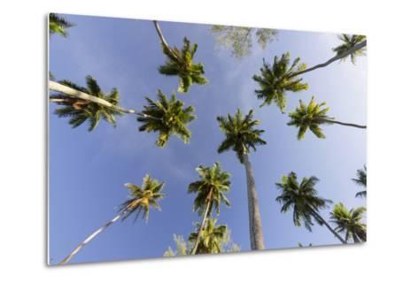 Coconut Trees, Plantation L'Union Estate, La Digue Island, the Seychelles-Rainer Mirau-Metal Print