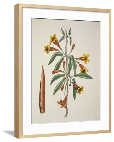 Bignonia Americana-Mark Catesby-Framed Art Print