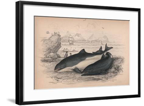 The Common Porpoise and the Cape Porpoise-Robert Hamilton-Framed Art Print