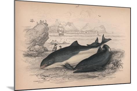 The Common Porpoise and the Cape Porpoise-Robert Hamilton-Mounted Giclee Print