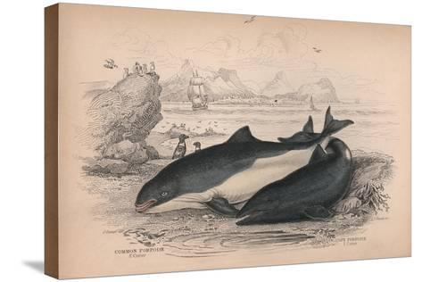 The Common Porpoise and the Cape Porpoise-Robert Hamilton-Stretched Canvas Print